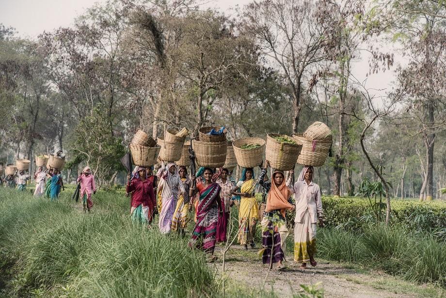 Assam Farmers